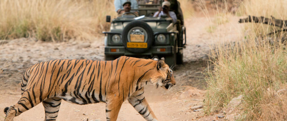 Wildlife Photography Tour India